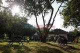Villa Koffie Rayap, Penginapan Khas Peninggalan Kolonial di Kabupaten Jember