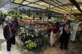 Libur Cuti Bersama, Saatnya Berburu Tanaman Hias di Taman Anggrek Ragunan