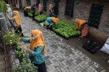 Warga Bambankerep Semarang Nikmati Panen Hasil Urban Farming