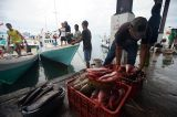 Gelombang Laut Tinggi, Harga Ikan di TPI Paotere Makassar Naik Dua Kali Lipat