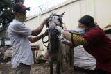 Pelayanan Kesehatan Rutin Kuda di Jakarta