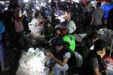Jalan-Jalan Tengah Malam, Melihat Perburuan Ikan Hias di Pasar Jatinegara