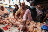 Perayaan Tradisi Meugang, Harga Ayam di Lhokseumawe Melonjak Naik 100 Persen