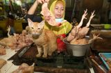Minggu Pertama Ramadhan, Harga Ayam Potong Merangkak Naik