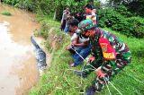 Menegangkan, Begini Proses Evakuasi 30 Ekor Buaya Dari Penangkaran Terbengkalai di Jambi