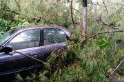 Hujan Deras Disertai Angin di Solo, Pohon Tumbang Timpa Dua Mobil