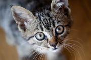 Kucing Perlu Mendapat Nutrisi yang Tepat agar Terhindar dari Covid-19