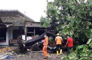Pohon Tumbang Diterjang Hujan Angin, Timpa Rumah dan Gudang di Sleman