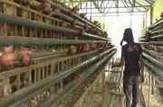 Warga Binaan Lapas Terbuka Kendal Produksi 17 Kg Telur Per Hari