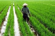 Petani Miskin Bakal Dapat Bantuan Tunai dan Sarana Produksi