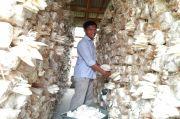 Jamur Tiram Tak Terpengaruh Covid-19, Duta Petani Milenial Raup Puluhan Juta