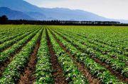 Pengamat Puji Strategi Kementan Manfaatkan Lahan Gambut untuk Pertanian