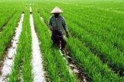 Antisipasi dan Adaptasi Pembangunan Pertanian Era New Normal