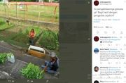Viral! Stadion Markas PSM Makassar Beralih Fungsi Jadi Kebun Sayur