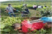 Mayat di Kebun Teh Kayuaro, Ternyata Dibunuh Kekasih Gelapnya