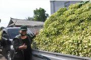Peduli Petani saat COVID-19, Bupati Tabanan Borong 10 Ton Sayur Hasil Panen