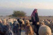 Kisah Bijak Para Sufi: Orang yang Waktunya Keliru