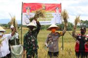 Kapolres Lahat Panen Raya di Desa Pagar Ruyung