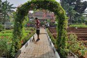 Gelar Jumat Bersih, Lingkungan Kopassus Ditanami Sayuran dan Buah