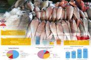KKP Ekspor 28 Ton Ikan Kerapu Hidup ke Hongkong