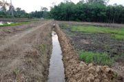 Kementan Tingkatkan Produksi Pangan Lewat Optimasi Lahan Rawa