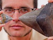 Kurang Setahun 3 Gigi Ditemukan, Megalodon Ada di AS dan Indonesia ?