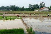 Penyuluh dan Petani Purbalingga Mengatasi Kelangkaan Kedelai