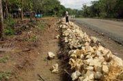 Proyek Jalan di Kecamatan Sajoangin Disebut Asal Jadi, Batu Tidak Ditanam