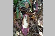 Mayat Wanita Muda Bergesper OSIS Dalam Empang Hebohkan Karawaci