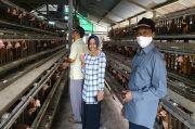 Komisi B DPRD Kobar Monitoring Peternak Ayam Petelur di Pangkalan Banteng