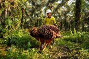 Petani Sawit Swadaya Paling Merasakan Dampak Pandemi Covid-19
