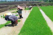 Amankan Stok Pangan Lewat Gerakan Percepatan Olah Tanah dan Tanam