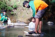 Nyaris Punah, Relawan Lepas Ribuan Ikan Dewa di Sungai Pacet Mojokerto