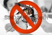 Selama Pandemi Corona, Kasus DBD Kabupaten Bekasi Turun