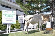 IZI Siapkan Olahan Daging Sapi Kurban Hari Raya Idul Adha saat Pandemi Covid-19