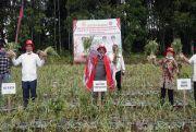Mentan Apresiasi Gubernur Sumut Bangkitkan Pertanian di Masa Pandemi Covid