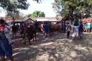 3 Bulan Ditutup karena Pandemi, Pedagang Hewan Buka Paksa Portal Pasar