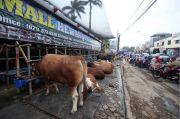 Jelang Idul Adha, Pedagang Hewan Kurban di Bekasi Bakal Dilakukan Rapid Test