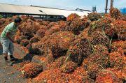 Bersua Dubes UE, Airlangga Utarakan Unek-Uneknya Soal Ekspor Minyak Sawit