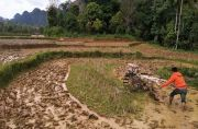 Petani dan Penyuluh Nagari Solok Ambah Genjot Percepatan Tanam