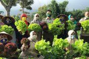 Berhasil Terapkan P2L, KWT Binama Pasok Sayuran ke Pasar Modern