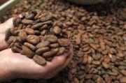 Indah Putri Indriani Ajak Semua Pihak Kembalikan Kejayaan Kakao di Lutra