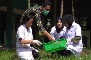 USU Teliti Minyak Astiri Daun Eucalyptus untuk Anti Corona