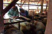 Pemkot Jakarta Selatan Akan Perketat Penjualan Hewan Kurban