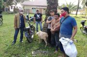 Mencuri Kambing Milik Pensiunan BUMN, Pengangguran Ditangkap Polsek Silau Kahean