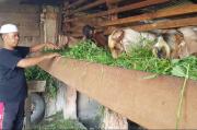 Imbas Corona, Pembeli Kambing Kurban di Linggau Turun hingga 50 Persen