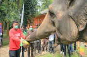 Medan Zoo Dibuka Lagi, Bobby Nasution Jadi Pengunjung Perdana