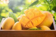Baik untuk Kesehatan, Ini Lima Manfaat Mengonsumsi Buah Mangga