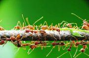 Kisah Nabi dan Desa Semut: Binatang yang Tidak Boleh Dibunuh
