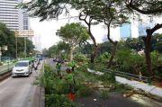 Rawan Tumbang, Ratusan Pohon di Jakarta Selatan Dipangkas dan Ditebang